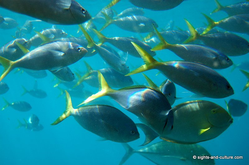 Great Barrier Reef Fish 3